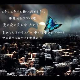 歌詞 アゲハ 蝶